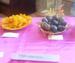 Золотая тыква и синяя картошка
